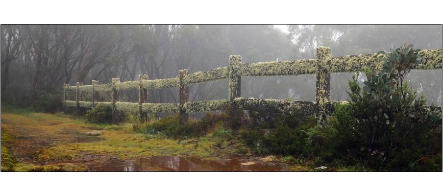 Mossy Fence Mt Baw Baw (0122)