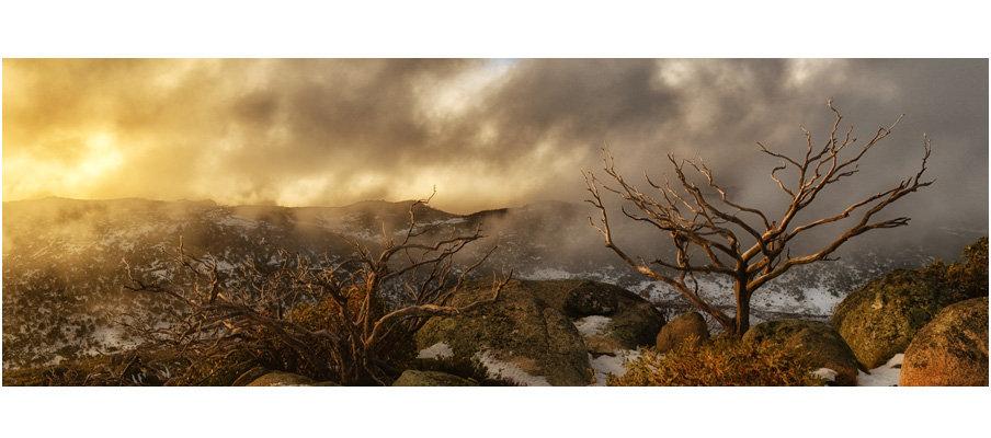 Mount Buffalo Sunset Tree (0080)