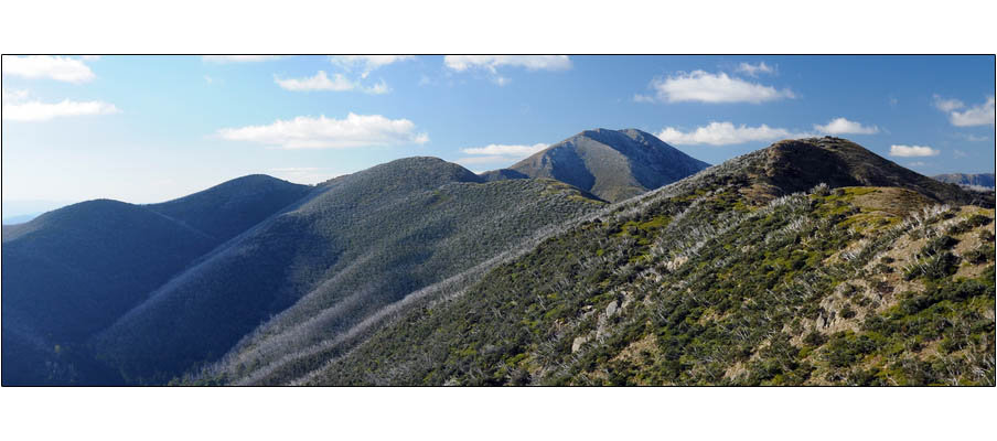 Mt Feathertop (0055)