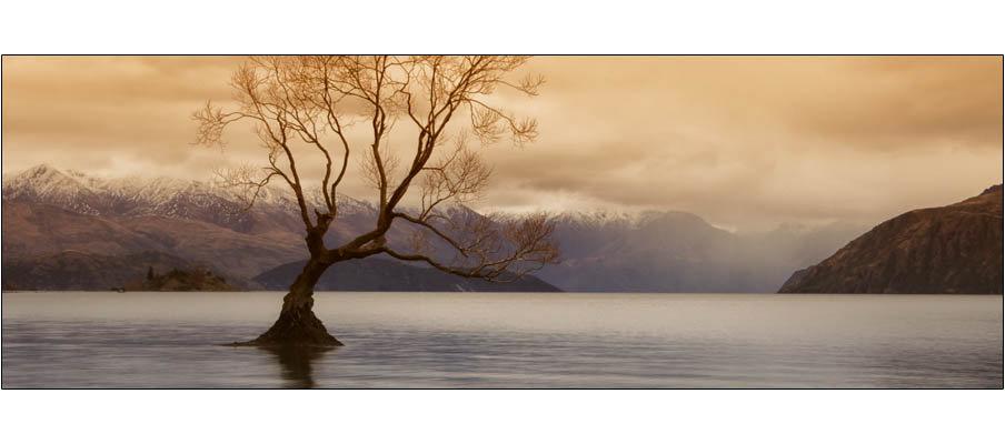 Lake Wanaka Tree (0043)