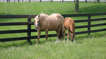 What Horse Owners Need To Know About Insurance