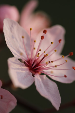 Makro Natur Bilder
