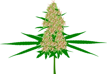 cannabis-1483798_1280.png