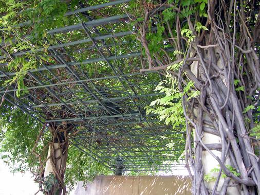 """""""Mimi's Garden"""" Pergola Trellis, Detail"""