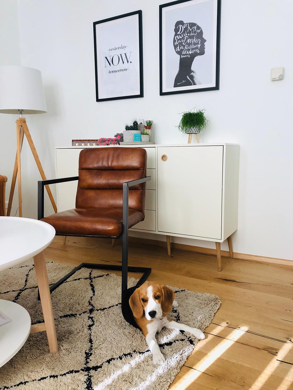 Therapiehund in Praxis für Psychotherapie