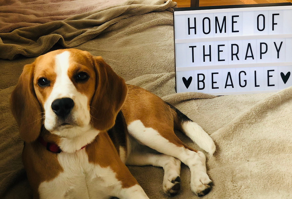 Therapiehund auf Couch