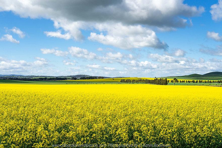 wallan-victoria-australia-canola-fields-