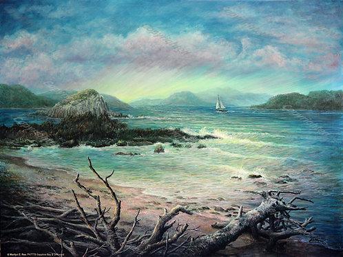 PNT778-Sapphire Bay & Driftwood