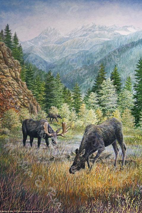 PRTGLP336-Three Moose At Glacier