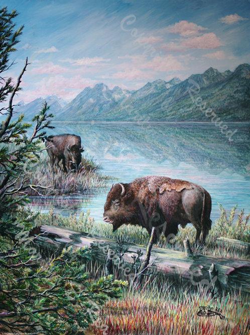 PRTGLP393-Buffalo at the Tetons