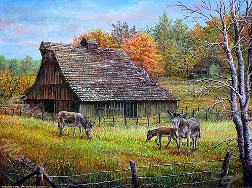 PRTGLP738 - Barn & Donkeys
