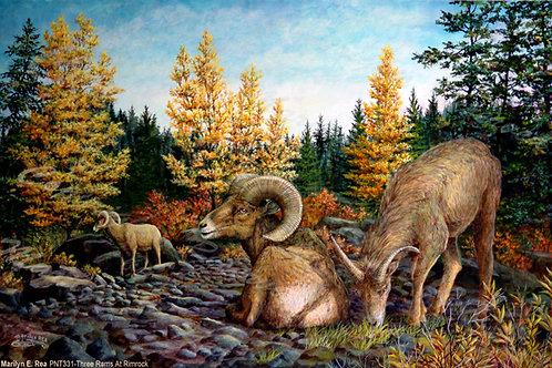 PRTGLP-331-Three Rams at Rimrock