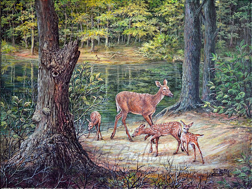 PRTGLP450-Deer and Three Fawns at Kerr Lake