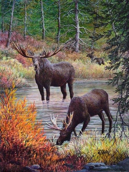 PRTGLP465-Moose Drinking