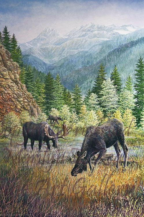 PRTGLP336-Three Moose At Rimrock