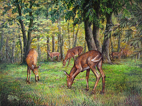 PRTGLP477-Deer Grazing on Chestnuts