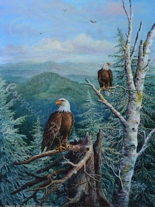 PRTGLP763- Eagles on Snag at Great Smokey Mountains
