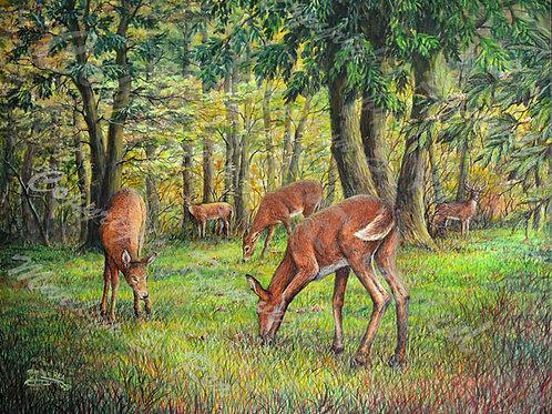 PRTGLP477-Deer Grazing on Chestnuts