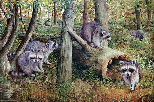 PRTGLP-386-Racoon Gathering