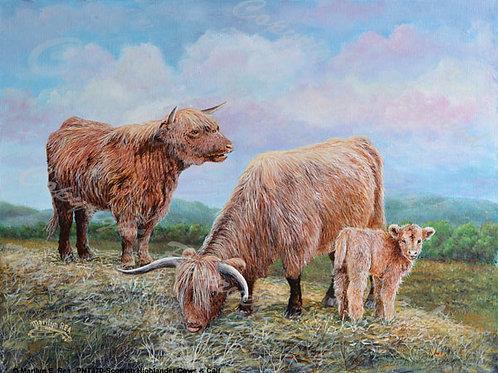 PRTGLP470- Scottish Highlander Cows & Calf