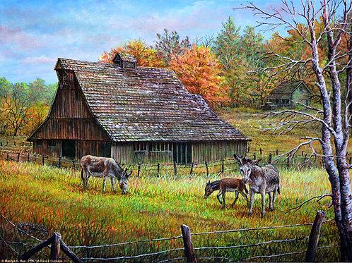 PNT738-Barn & Donkeys