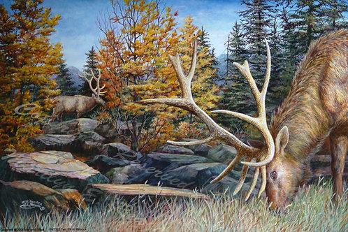 PRTGLP332-Two Elk at Rimrock