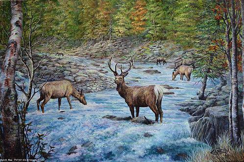 PRTGLP481-Elk At Massula Creek