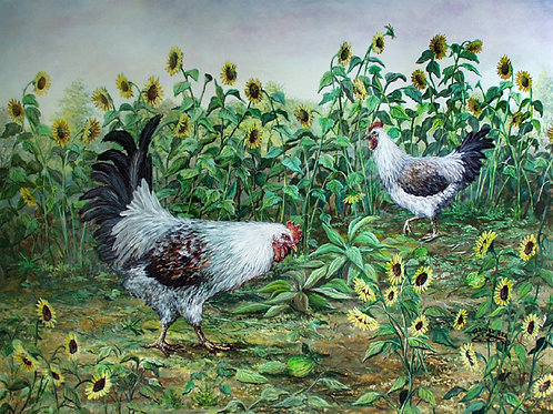 PNT655-Chickens & Sunflowers