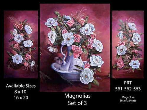 PRTOE561-562-563  Magnolias