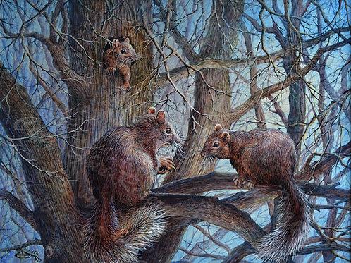 PRTGLP494-Squirrels