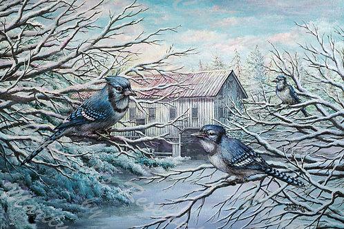 PRTGLP-380-Bluejays & Winter Barn