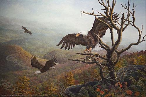 PRTGLP340-Eagles At Great Smokey Mts.