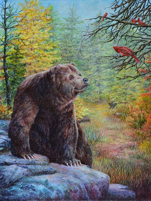 PRT468-Bear on Rocks