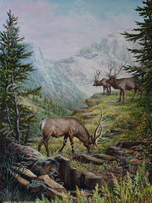 PNT752-3 Elk at North Cascades