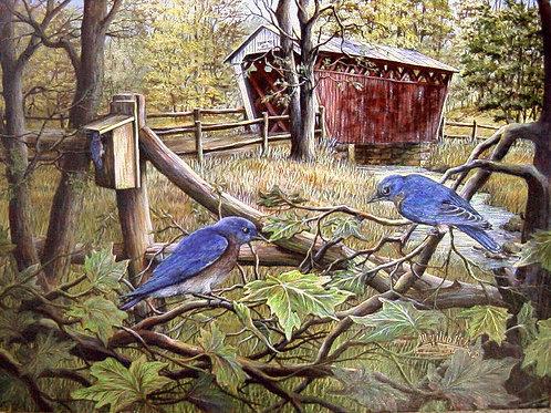 PRTOE567-Bluebirds