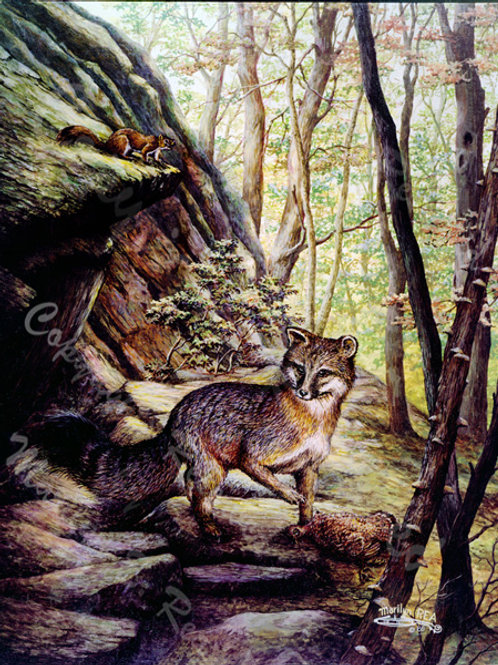 PRTGLP-204-Fox & Grouse