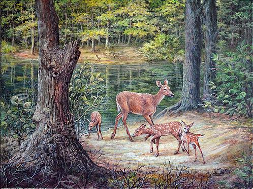 PRTGLP450-Deer and Three Fawns at Kerr Lake