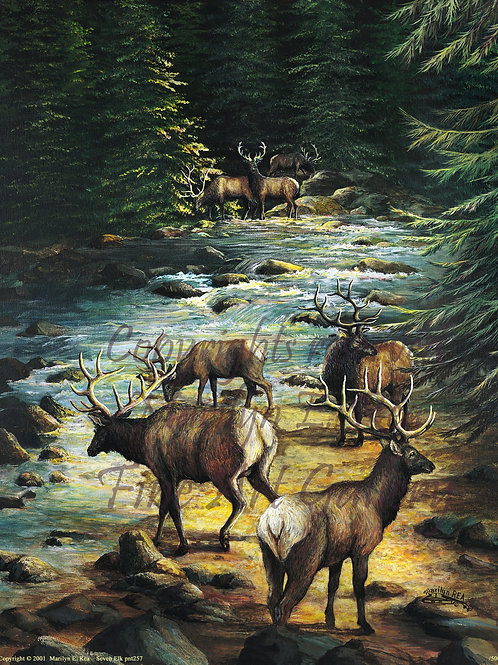 PRTGLP257-Seven Elk