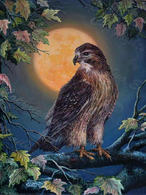 PNT772-Shortailed Hawk & Moon