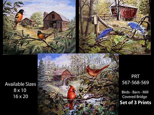PRTOE567-568-569  Bird Scenes