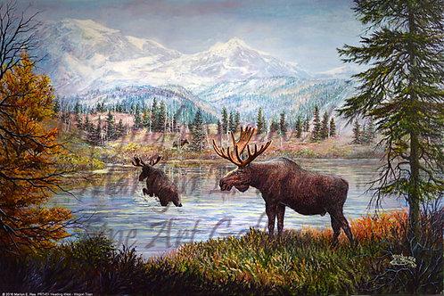 PRTGLP455-Moose at Silver Lake
