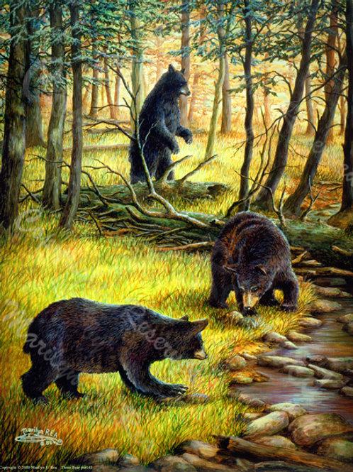 PRTGLP143-Three Bears
