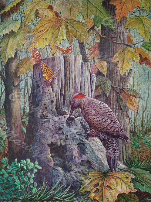 PRTGLP-399-Flicker Woodpecker