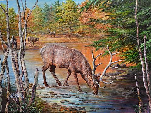 PRTGLP460-Elk Drinking and Birch Trees