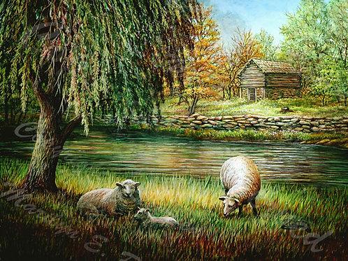 PRTGLP368-Willows & Sheep