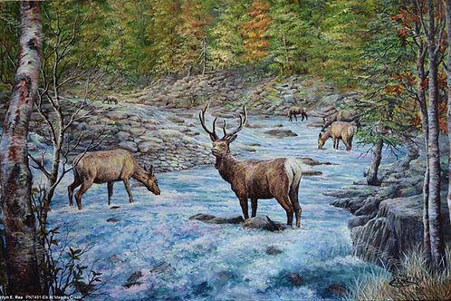 PRTGLP481-Elk at Massula Creek