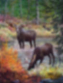 PNT465-MooseInWater---8x10-web.jpg