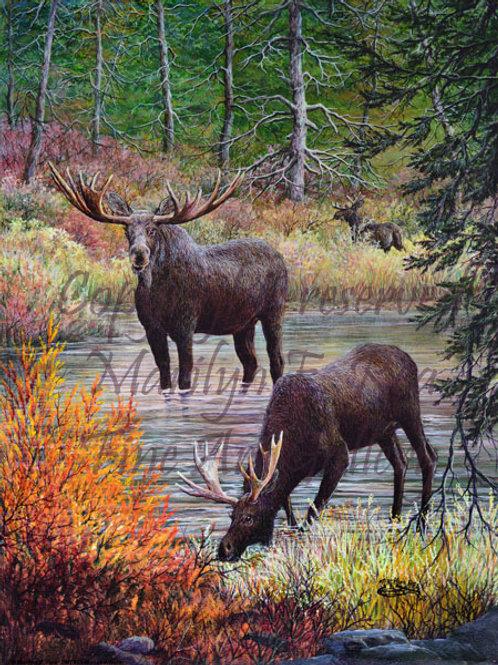 PRTGLP465-Moose In Water