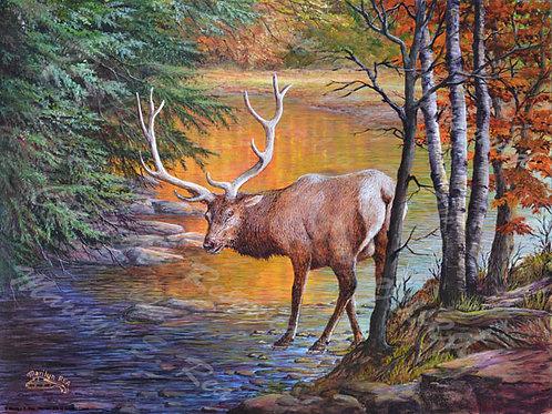 PRTGLP461-Elk At Golden Creek