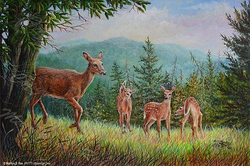 PNT751-Blueridge Deer